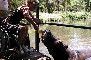 Woman in wheelchair feeding a hippo